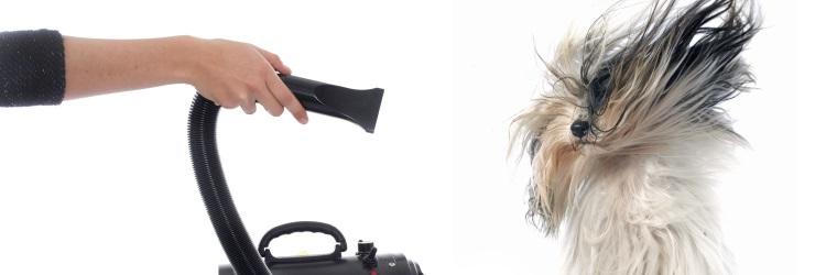 waterblazer voor de hond